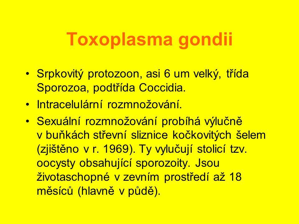 Toxoplasma gondii Srpkovitý protozoon, asi 6 um velký, třída Sporozoa, podtřída Coccidia. Intracelulární rozmnožování.