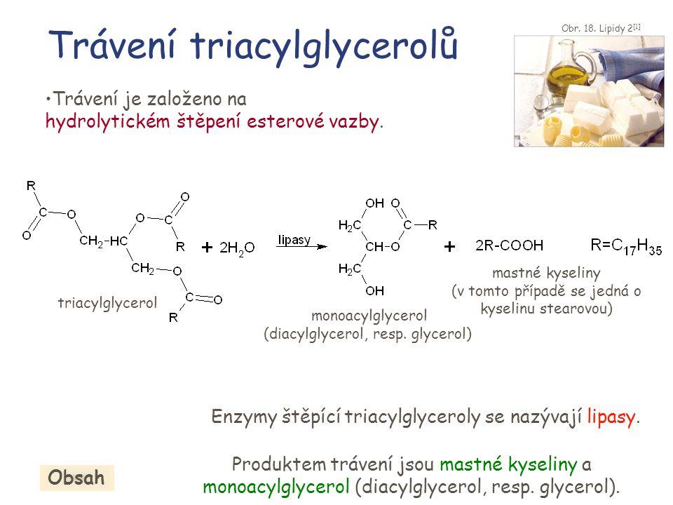 Trávení triacylglycerolů