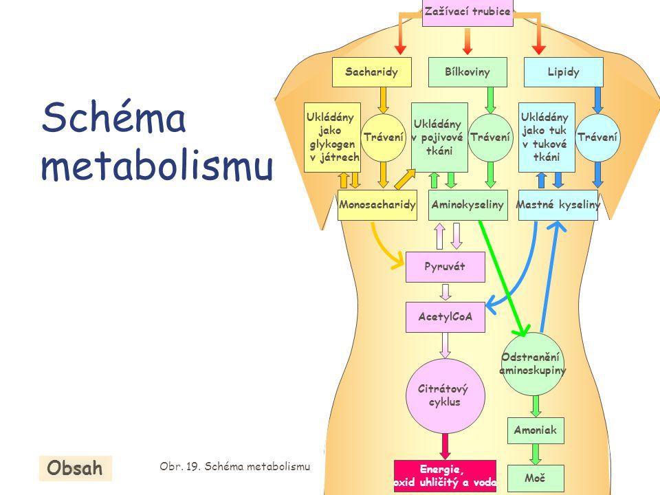 Obr. 19. Schéma metabolismu