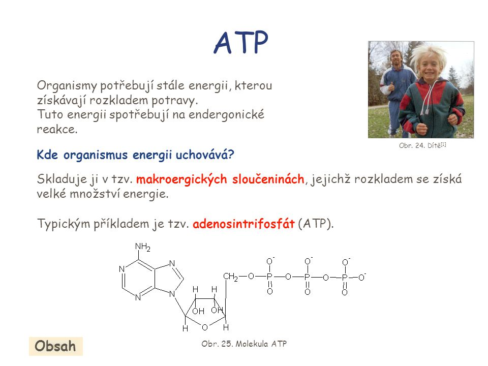 ATP Organismy potřebují stále energii, kterou získávají rozkladem potravy. Tuto energii spotřebují na endergonické reakce.
