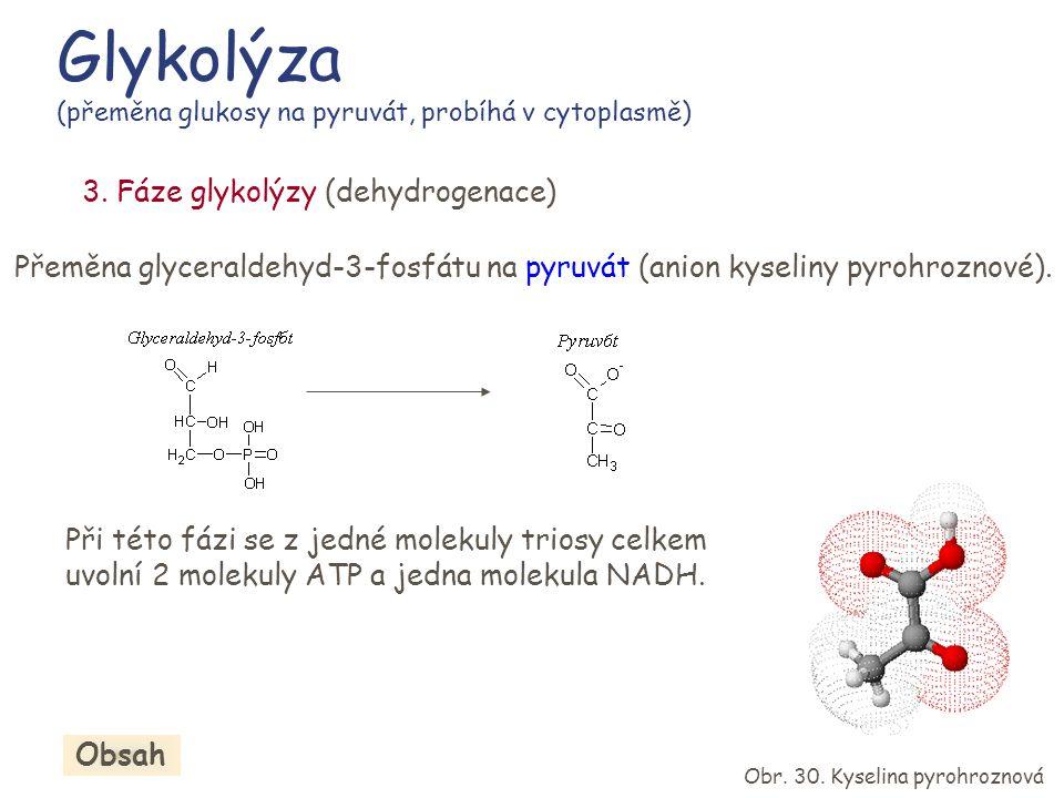 Glykolýza (přeměna glukosy na pyruvát, probíhá v cytoplasmě)