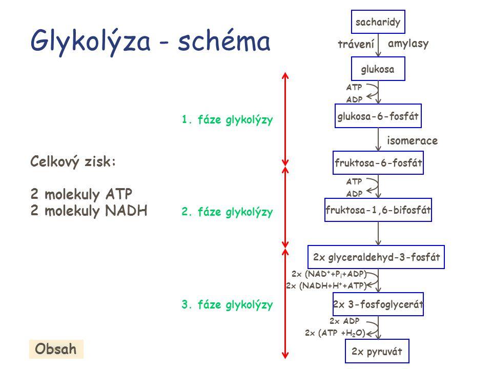 2x glyceraldehyd-3-fosfát