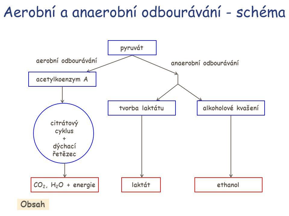 Aerobní a anaerobní odbourávání - schéma