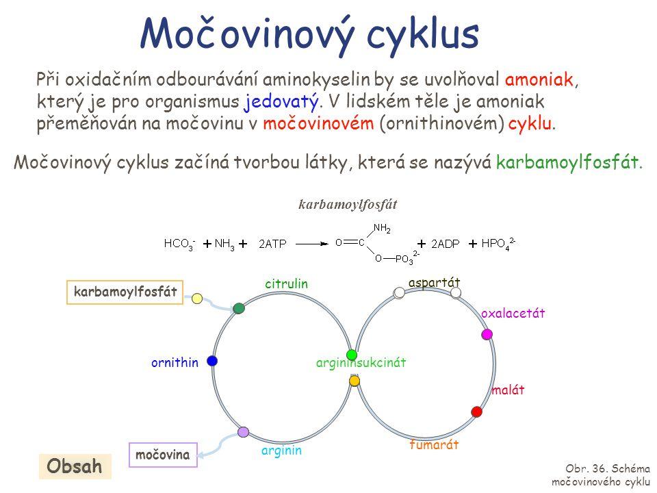 Močovinový cyklus