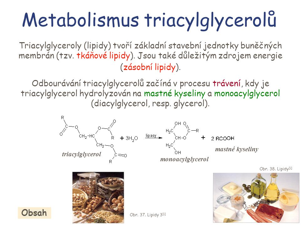 Metabolismus triacylglycerolů