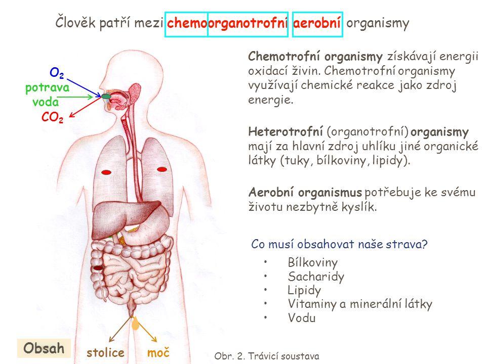 Člověk patří mezi chemoorganotrofní aerobní organismy