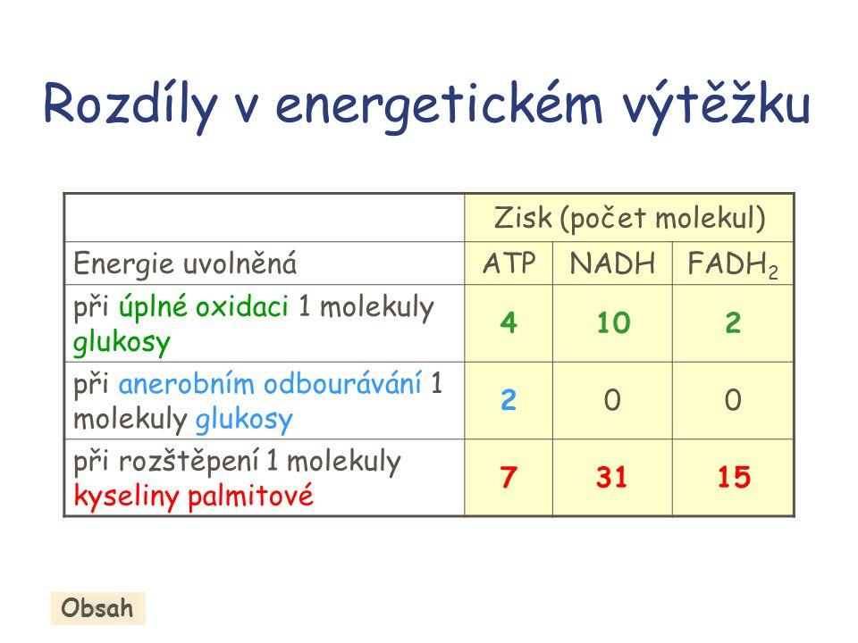 Rozdíly v energetickém výtěžku