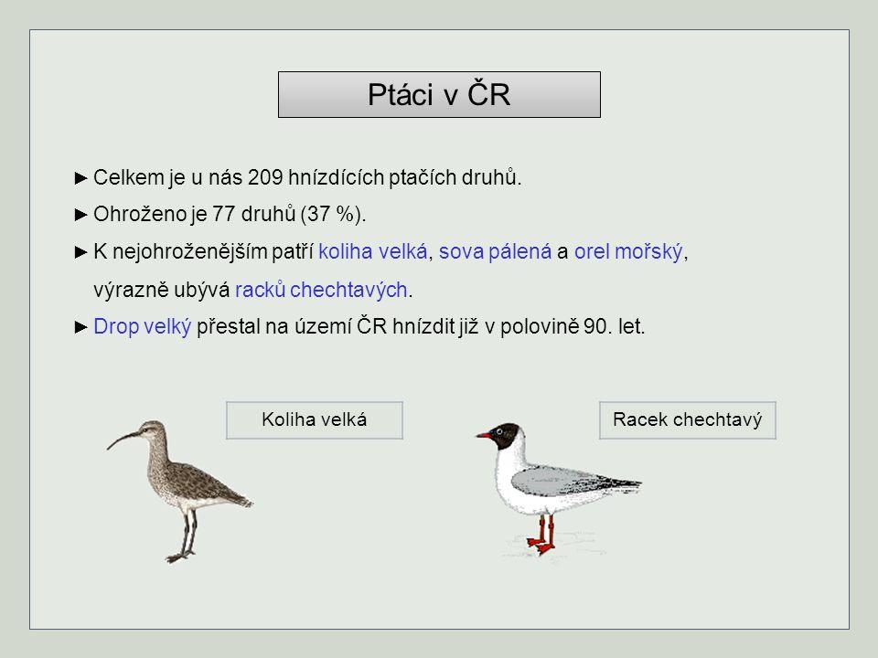 Ptáci v ČR ► Celkem je u nás 209 hnízdících ptačích druhů.