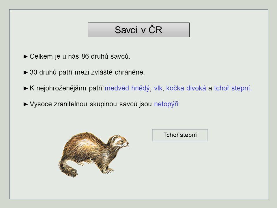 Savci v ČR ► Celkem je u nás 86 druhů savců.