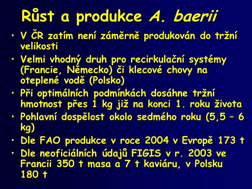 Růst a produkce A. baerii
