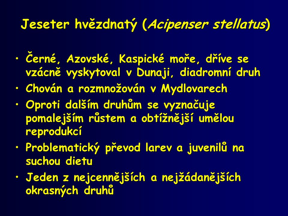 Jeseter hvězdnatý (Acipenser stellatus)