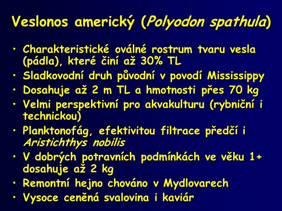 Veslonos americký (Polyodon spathula)