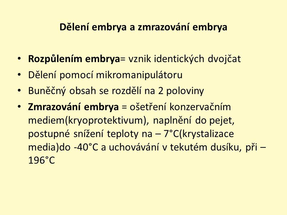 Dělení embrya a zmrazování embrya