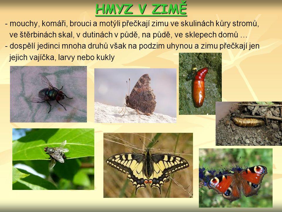 HMYZ V ZIMĚ - mouchy, komáři, brouci a motýli přečkají zimu ve skulinách kůry stromů,