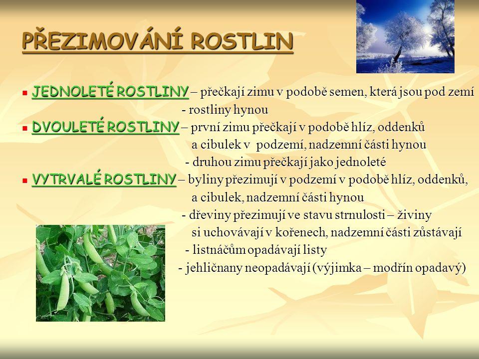 PŘEZIMOVÁNÍ ROSTLIN JEDNOLETÉ ROSTLINY – přečkají zimu v podobě semen, která jsou pod zemí. - rostliny hynou.