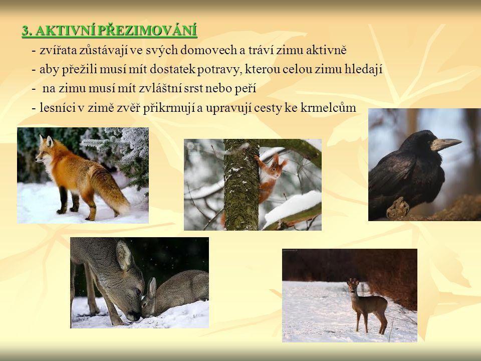 3. AKTIVNÍ PŘEZIMOVÁNÍ - zvířata zůstávají ve svých domovech a tráví zimu aktivně.