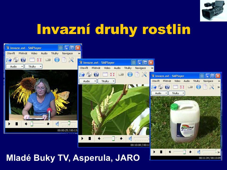 Invazní druhy rostlin Mladé Buky TV, Asperula, JARO
