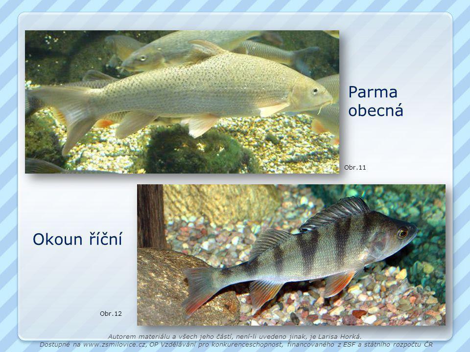 Parma obecná Okoun říční Obr.11 Obr.12