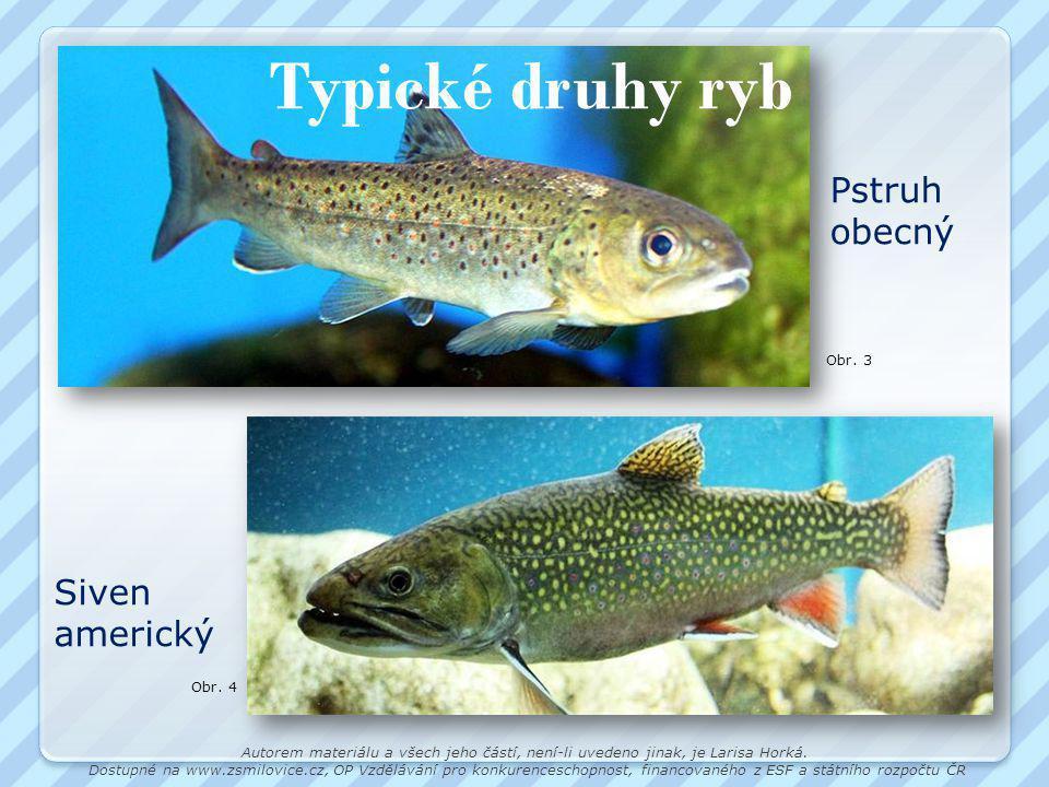 Typické druhy ryb Pstruh obecný Siven americký Obr. 3 Obr. 4