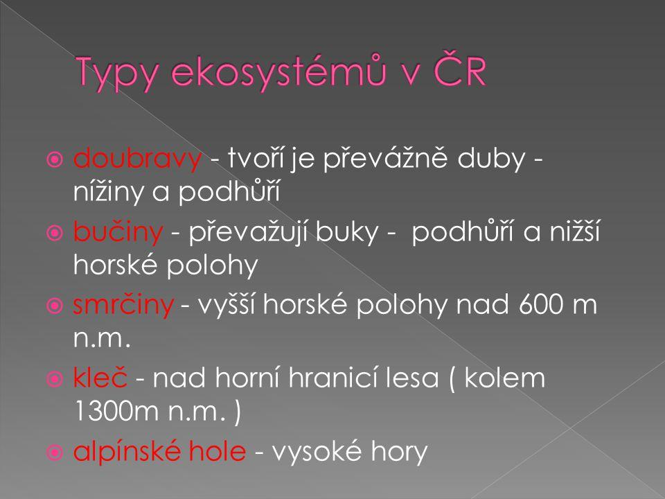 Typy ekosystémů v ČR doubravy - tvoří je převážně duby - nížiny a podhůří. bučiny - převažují buky - podhůří a nižší horské polohy.