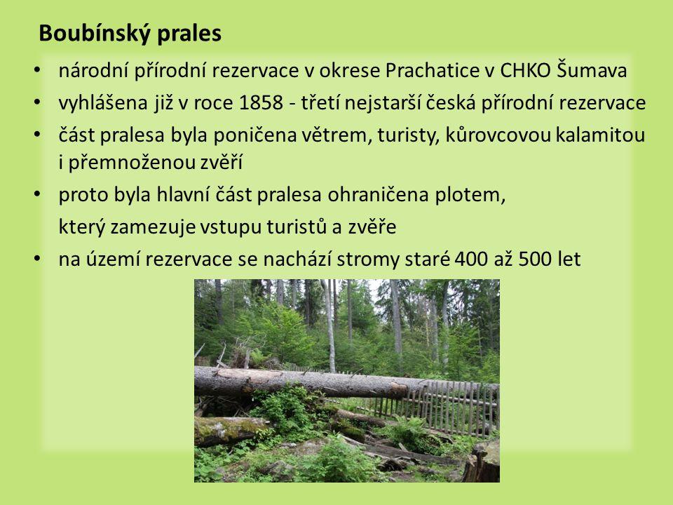 Boubínský prales národní přírodní rezervace v okrese Prachatice v CHKO Šumava. vyhlášena již v roce 1858 - třetí nejstarší česká přírodní rezervace.