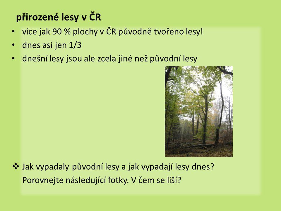 přirozené lesy v ČR více jak 90 % plochy v ČR původně tvořeno lesy!