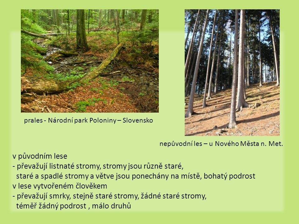 - převažují listnaté stromy, stromy jsou různě staré,