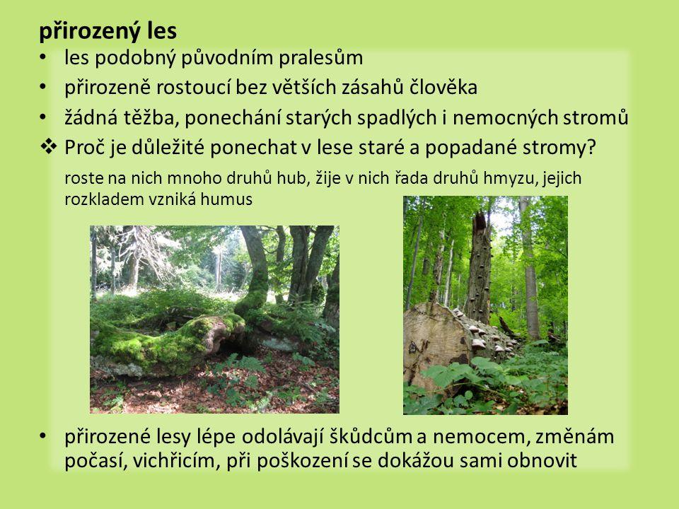 přirozený les les podobný původním pralesům