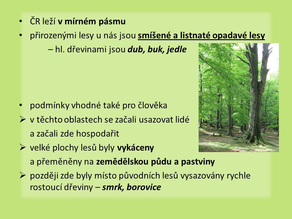 ČR leží v mírném pásmu přirozenými lesy u nás jsou smíšené a listnaté opadavé lesy. – hl. dřevinami jsou dub, buk, jedle.