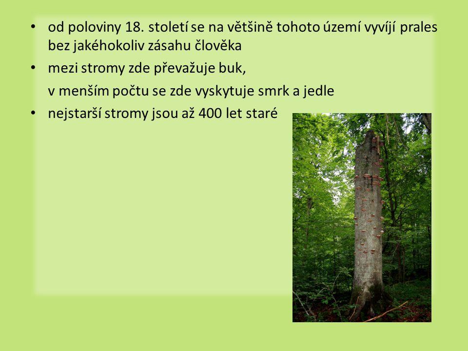 od poloviny 18. století se na většině tohoto území vyvíjí prales bez jakéhokoliv zásahu člověka