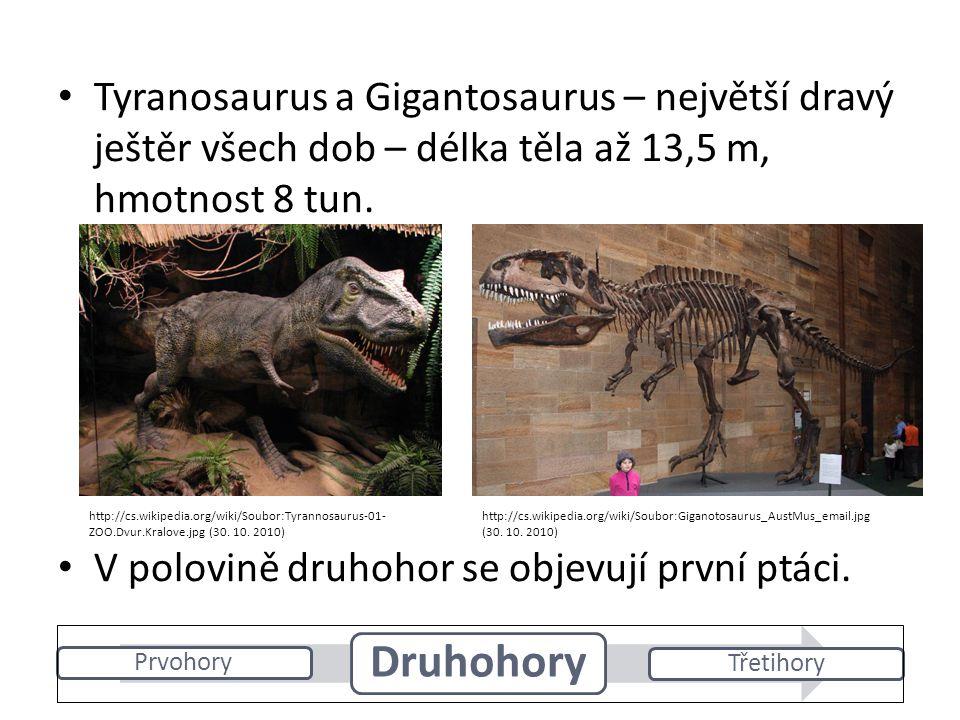Tyranosaurus a Gigantosaurus – největší dravý ještěr všech dob – délka těla až 13,5 m, hmotnost 8 tun.