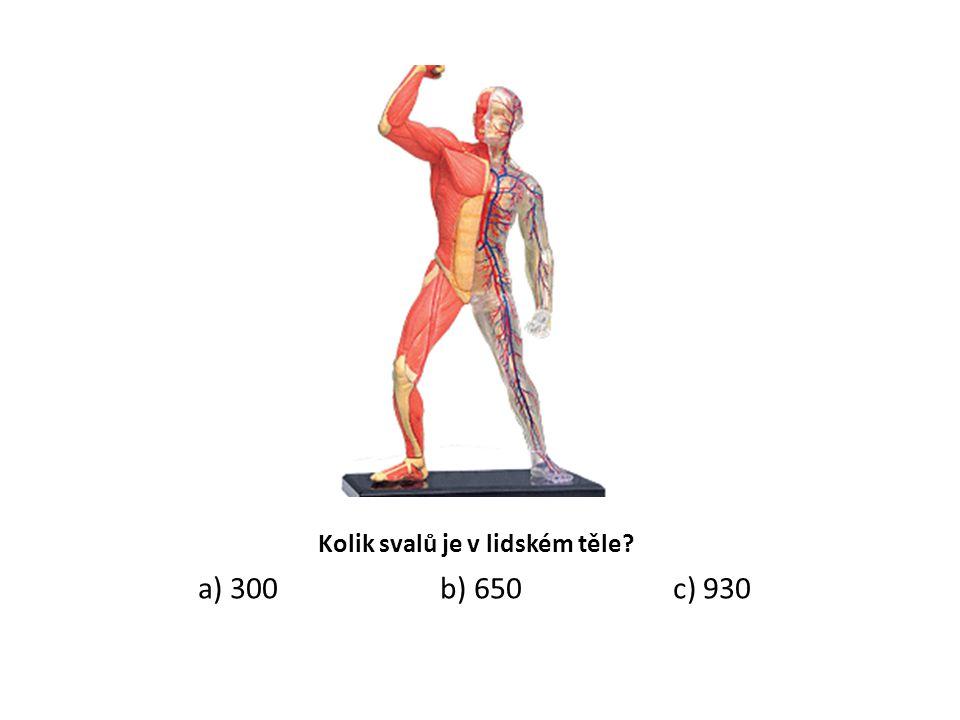 Kolik svalů je v lidském těle