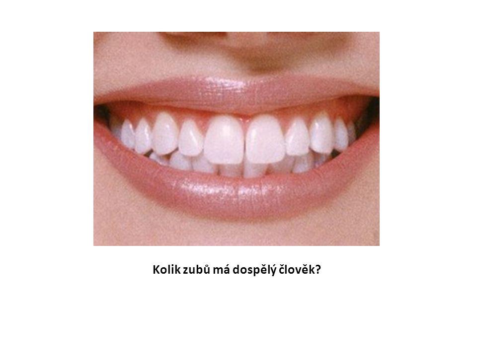 Kolik zubů má dospělý člověk