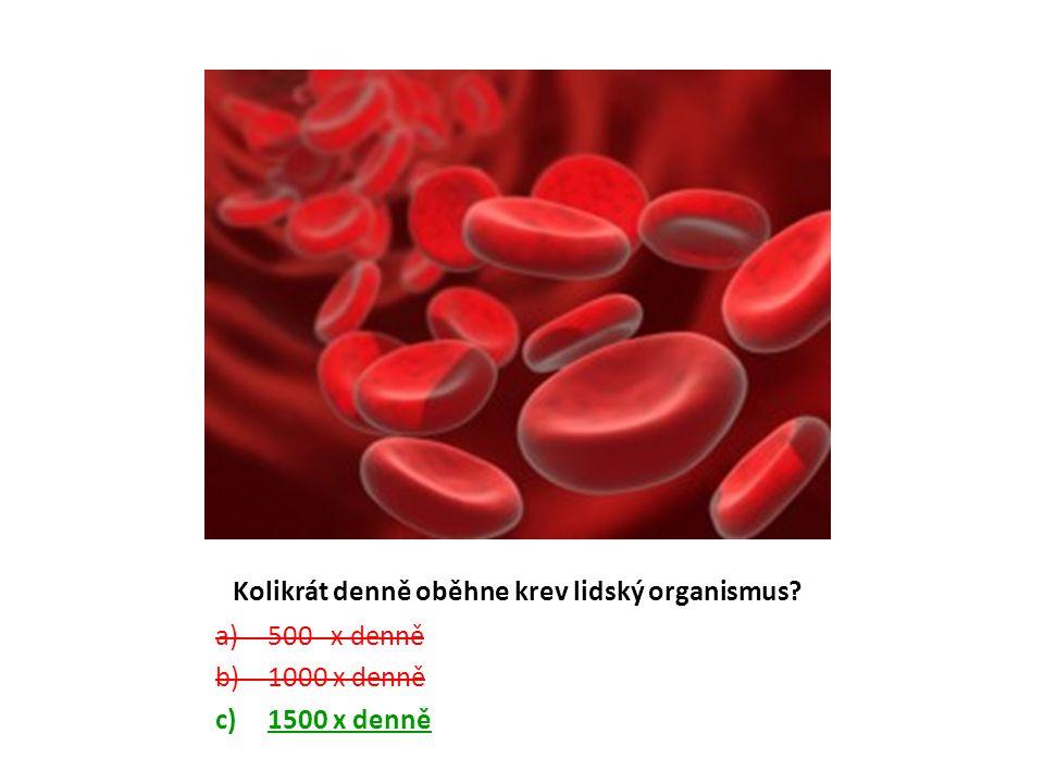 Kolikrát denně oběhne krev lidský organismus