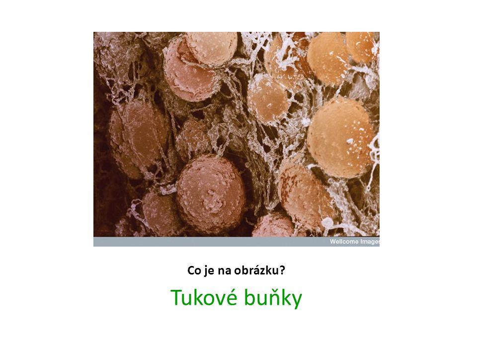 Co je na obrázku Tukové buňky