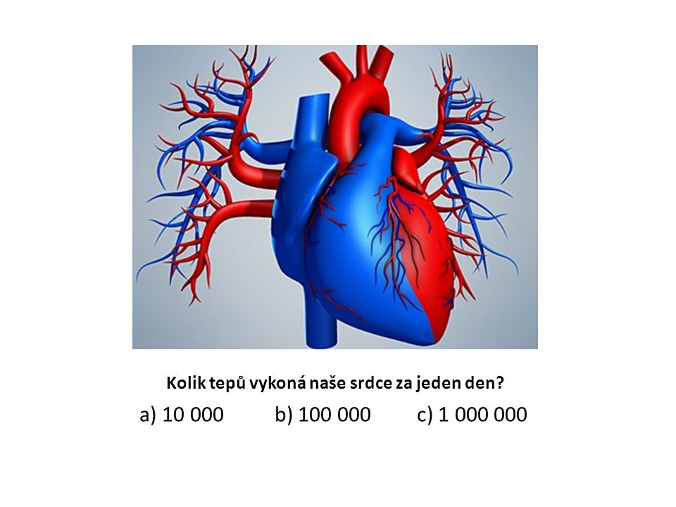 Kolik tepů vykoná naše srdce za jeden den