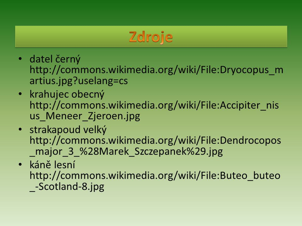 Zdroje datel černý http://commons.wikimedia.org/wiki/File:Dryocopus_martius.jpg uselang=cs.