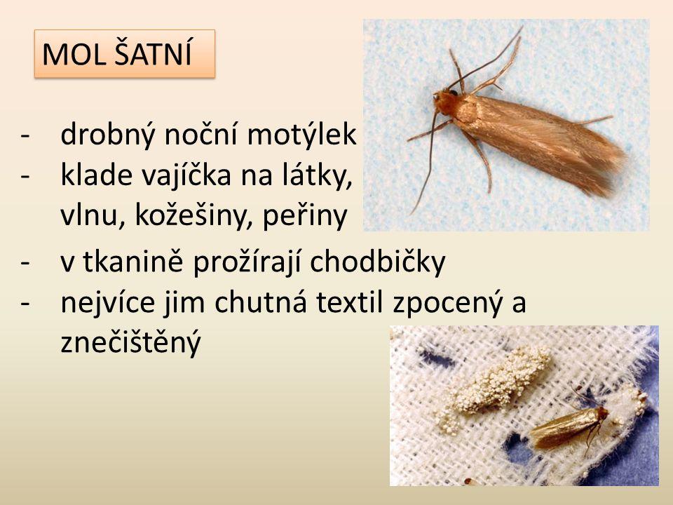 MOL ŠATNÍ drobný noční motýlek. klade vajíčka na látky, vlnu, kožešiny, peřiny. v tkanině prožírají chodbičky.