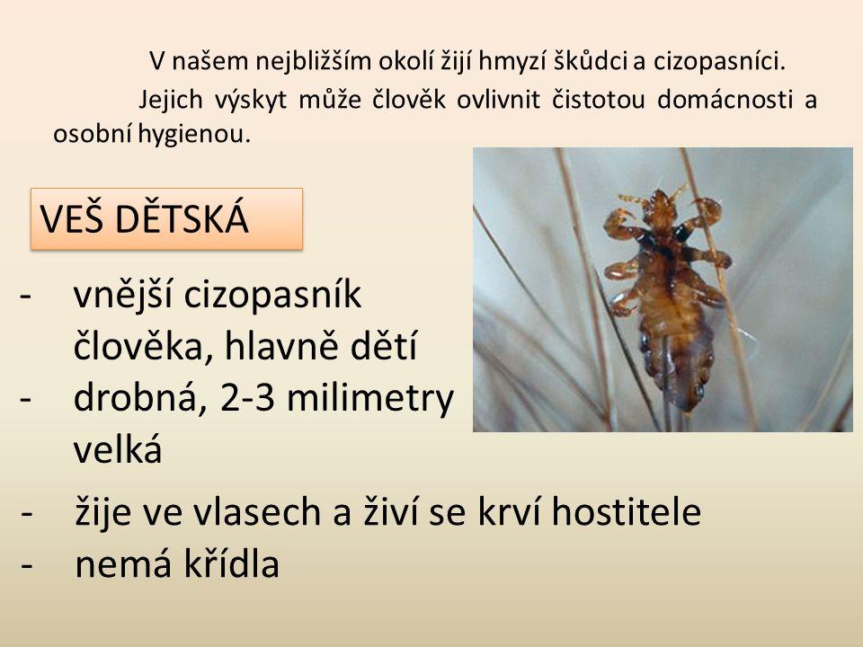 V našem nejbližším okolí žijí hmyzí škůdci a cizopasníci.