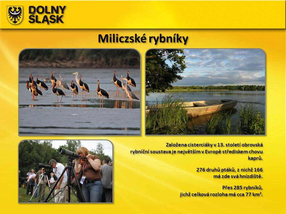 Miliczské rybníky Založena cisterciáky v 13. století obrovská rybníční soustava je největším v Evropě střediskem chovu kaprů.
