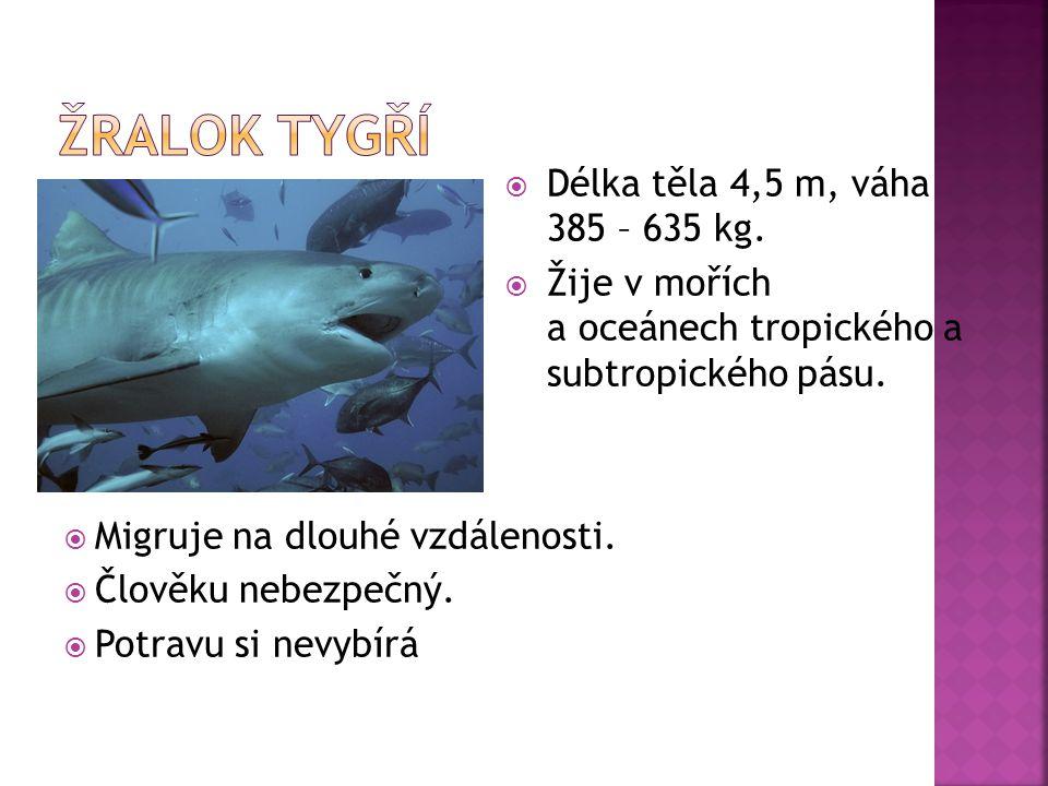 Žralok tygří Délka těla 4,5 m, váha 385 – 635 kg.