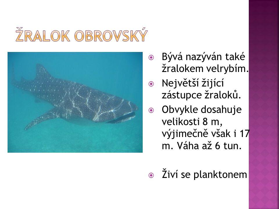 Žralok obrovský Bývá nazýván také žralokem velrybím.