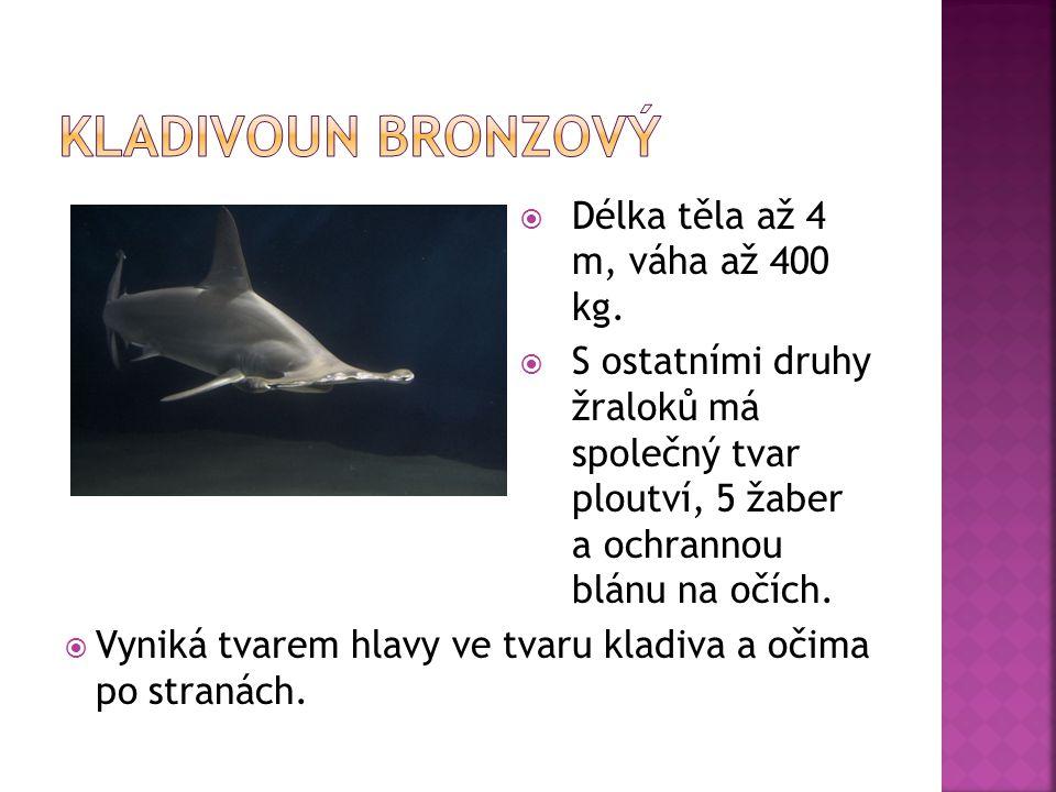 Kladivoun bronzový Délka těla až 4 m, váha až 400 kg.