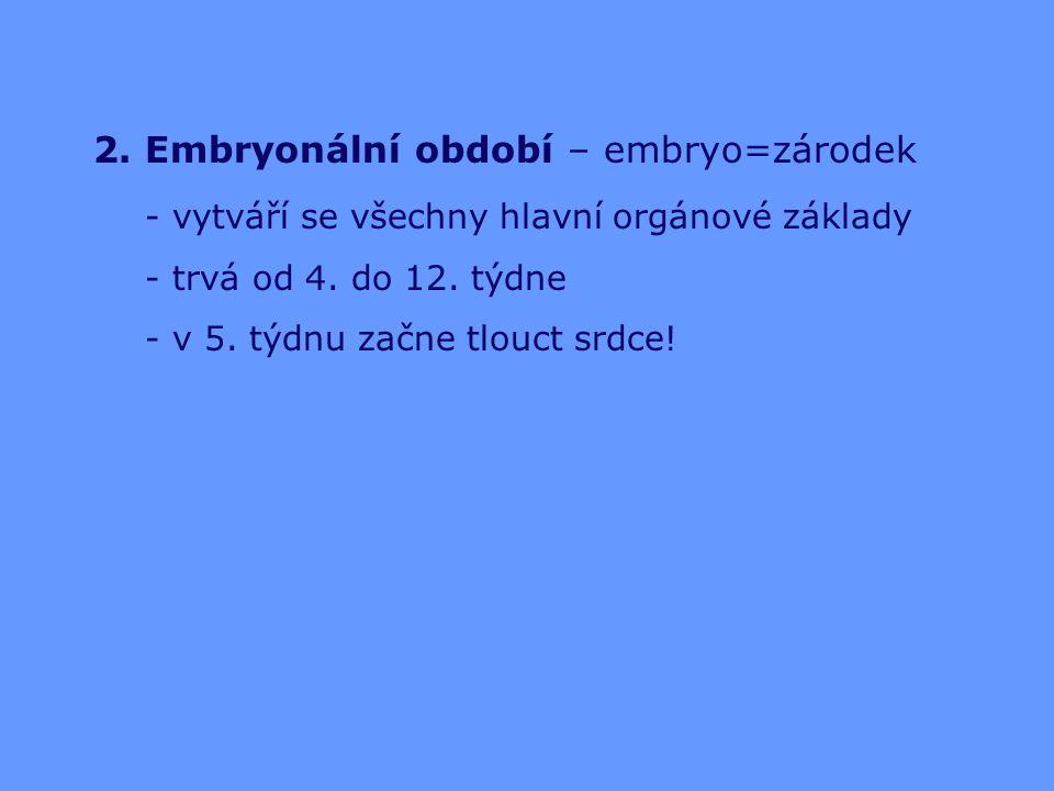 2. Embryonální období – embryo=zárodek