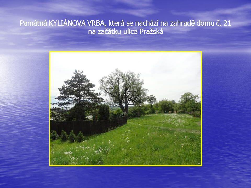 Památná KYLIÁNOVA VRBA, která se nachází na zahradě domu č