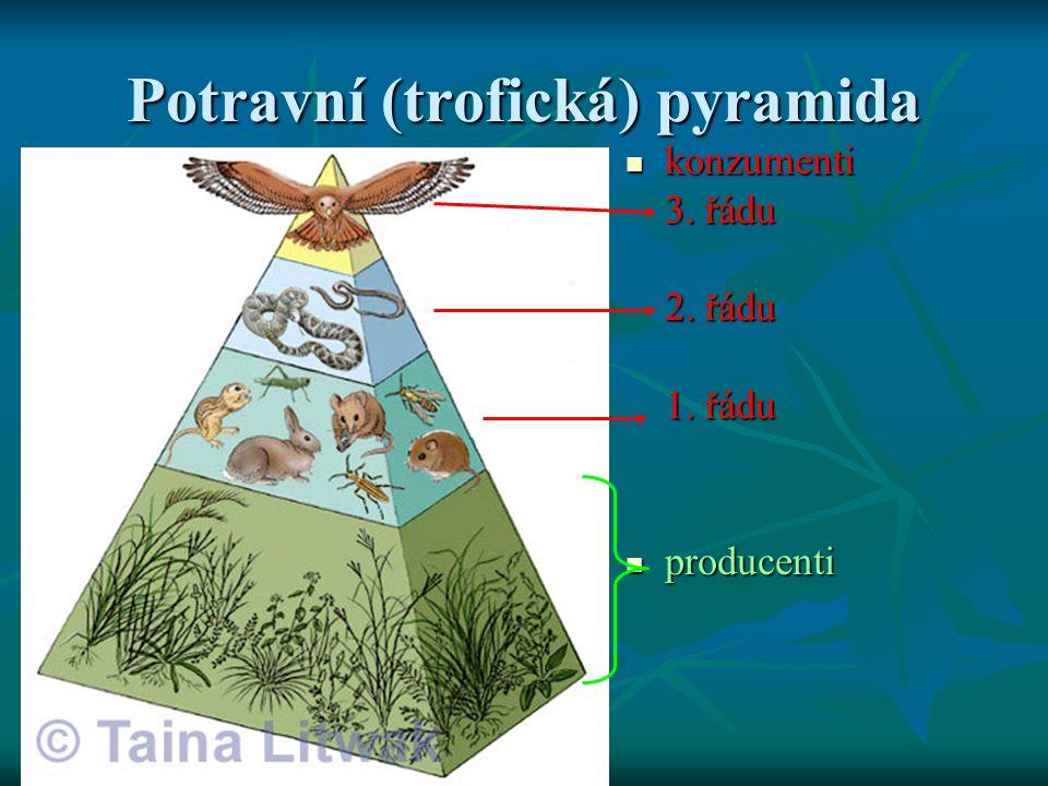 Potravní (trofická) pyramida