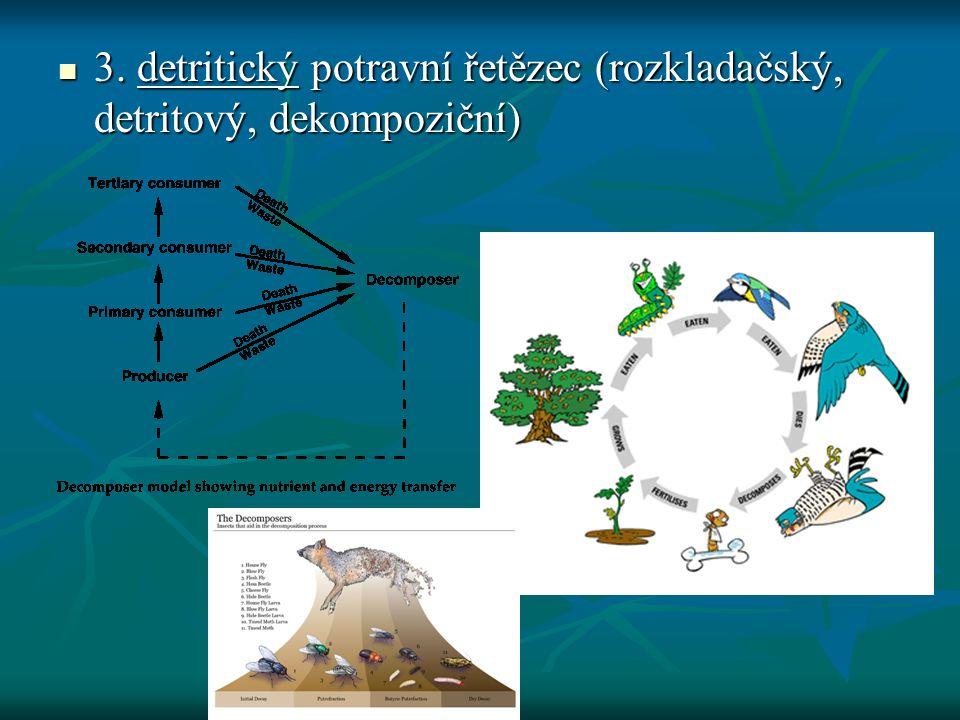 3. detritický potravní řetězec (rozkladačský, detritový, dekompoziční)