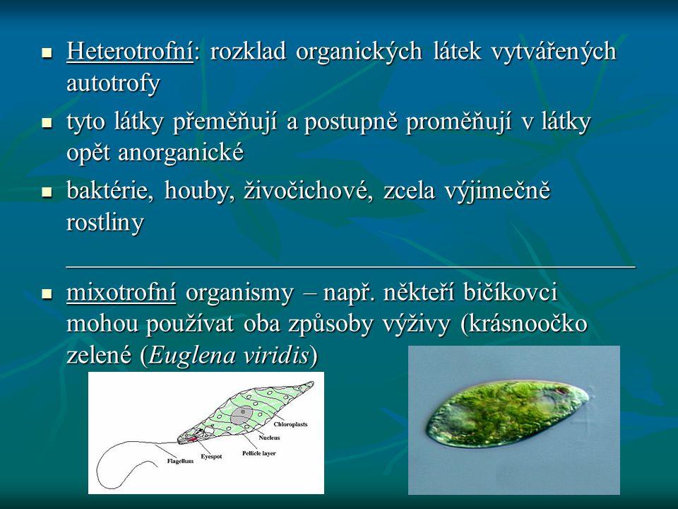 Heterotrofní: rozklad organických látek vytvářených autotrofy