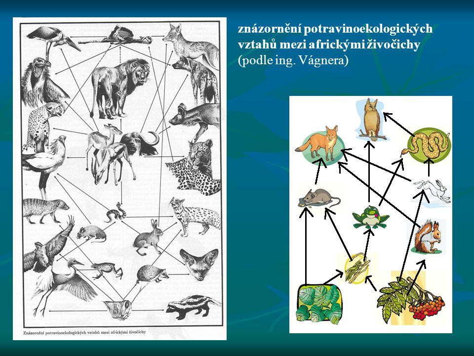 znázornění potravinoekologických vztahů mezi africkými živočichy (podle ing. Vágnera)