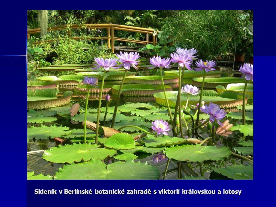 Skleník v Berlínské botanické zahradě s viktorií královskou a lotosy